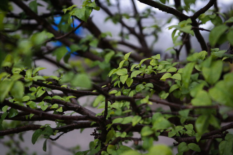 Low angle view of green leaves on branch
