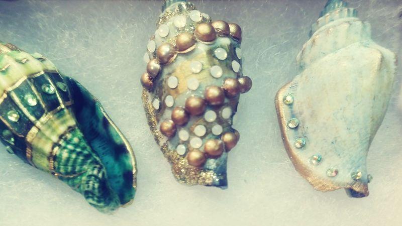 Seashell Collection Seashell Close-up Seashells Embellished Shells Shell Art
