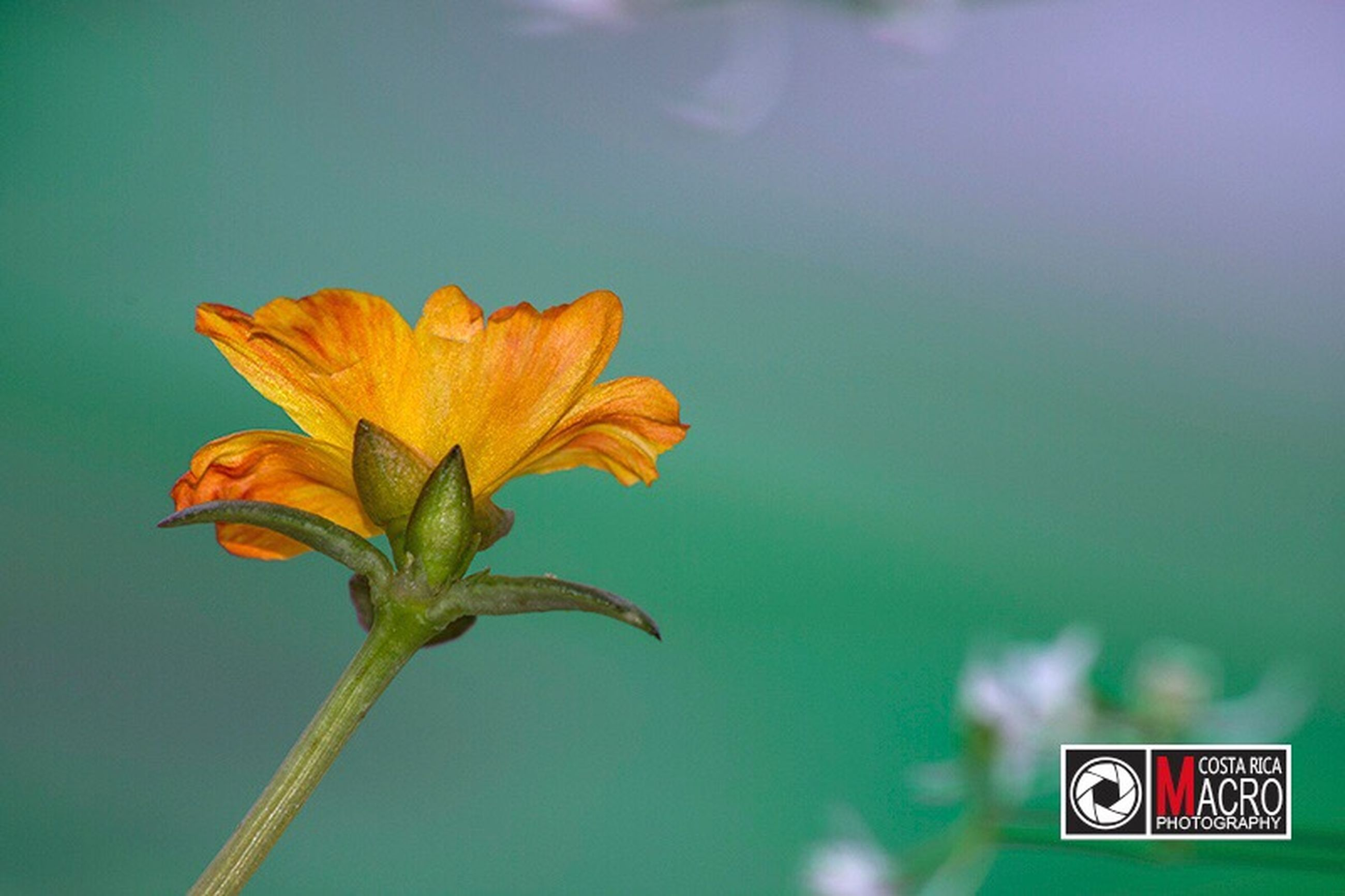 nature, close-up, beauty in nature, leaf, day, no people, outdoors, fragility, growth, flower, sky, water, freshness
