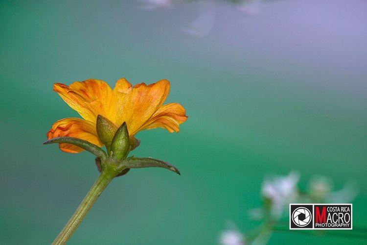 Sunday morning / http://www.costaricamacrophotography.com Nature Flower Close-up Beauty In Nature Plant Day Life Wonderful Hermoso Vida De Cerca Belleza Costa Rica Pura Vida Flor Macro