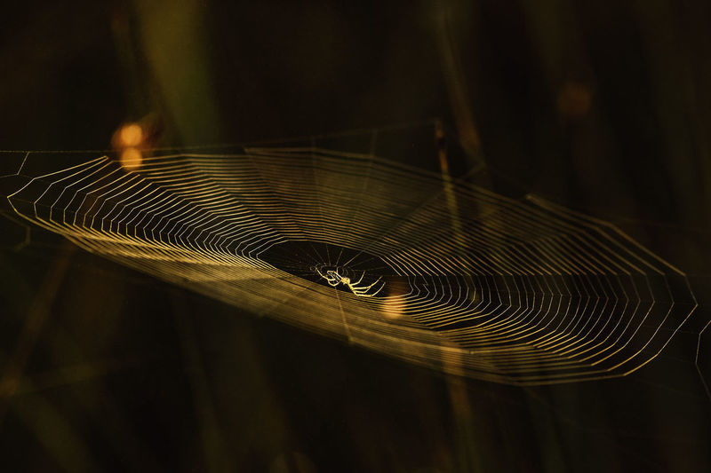 Beautiful sunlight on spider web with a reflection. Spider Web Fragility Close-up Vulnerability  No People Focus On Foreground Spider Pattern Natural Pattern Animal Themes Nature Day Animal Arachnid Invertebrate Arthropod Intricacy Selective Focus Insect Animals In The Wild Outdoors Complexity Web Black Background Concentric