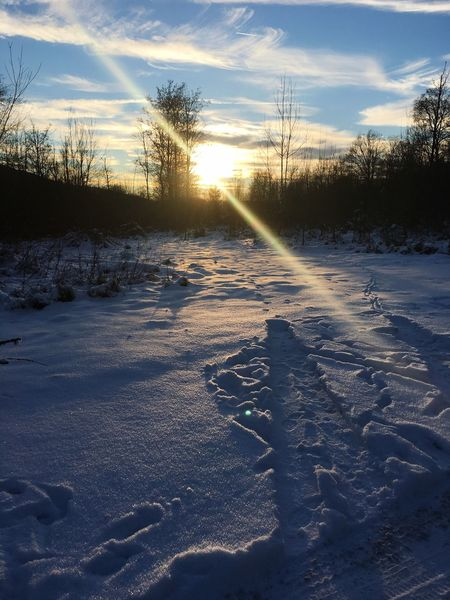 Winter Snow Nature Cold Temperature Sunlight Outdoors Weather