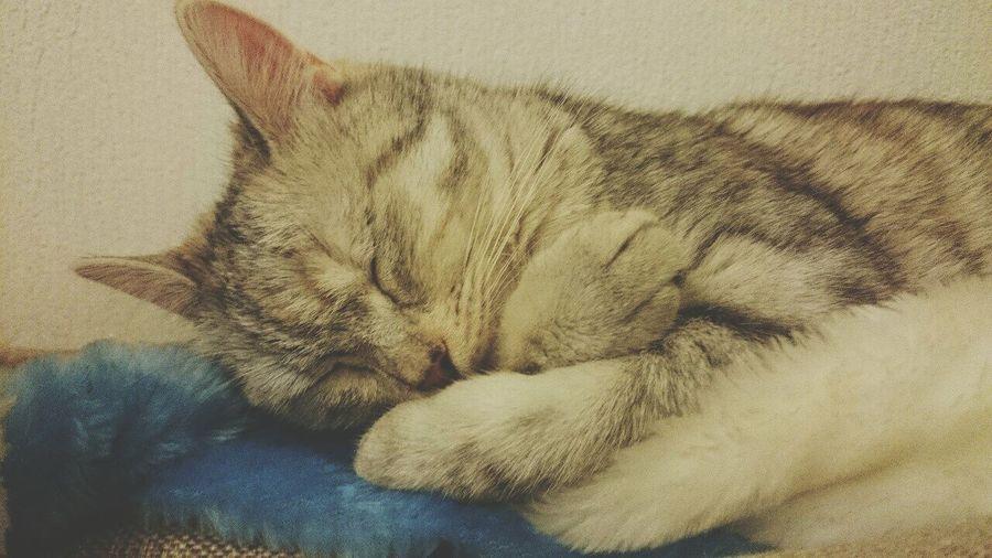Sweet dreams Cat Pet Cat Lovers