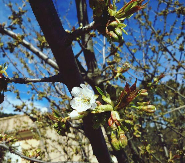 Spring Flowers Sun Taking Photos Hello World Enjoying Life
