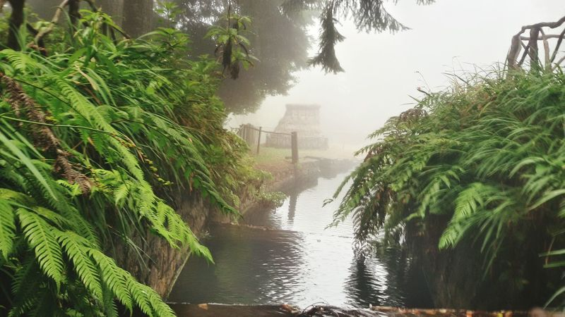 Water Extreme Weather Flood Fog Caldeiraoverde Queimadas Santana Nature Tree Day Outdoors Tranquility Vacations Madeira Islands, Portugal EyEmNewHere IloveMadeira TripAdvisor Walks Scenics Freshness waterfall water landscape nature beautiful [