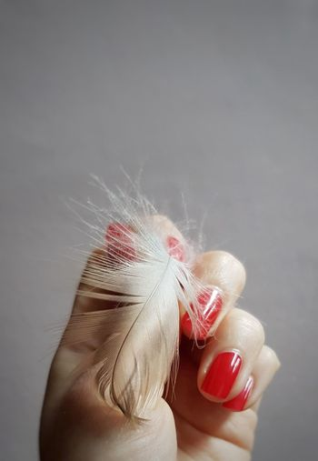 Cropped Hand Of Woman Holding Feather Against Gray Background