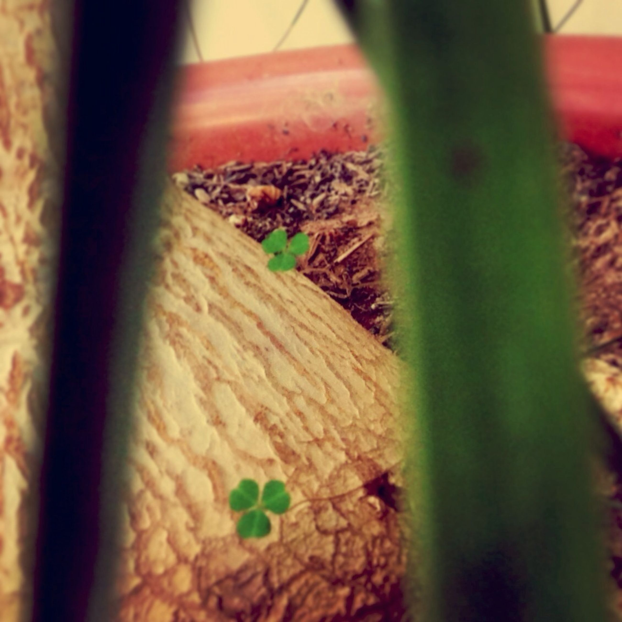 selective focus, close-up, plant, leaf, growth, green color, focus on foreground, nature, day, no people, high angle view, indoors, sunlight, potted plant, green, freshness, wood - material, abandoned, damaged