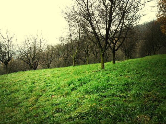 Trees Garden Green Colorful Omg I so much miss green fields~_~