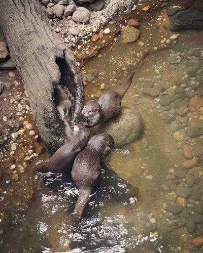 Otters Animals