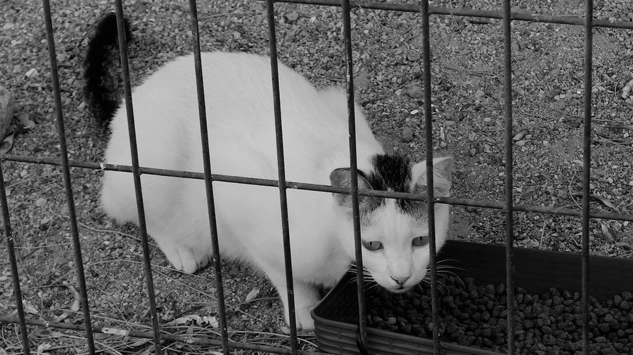 Cat Metal Day No People Barrier Fence Boundary Nature Animal Themes Cage Outdoors Animal Security One Animal Pets Animals In Captivity