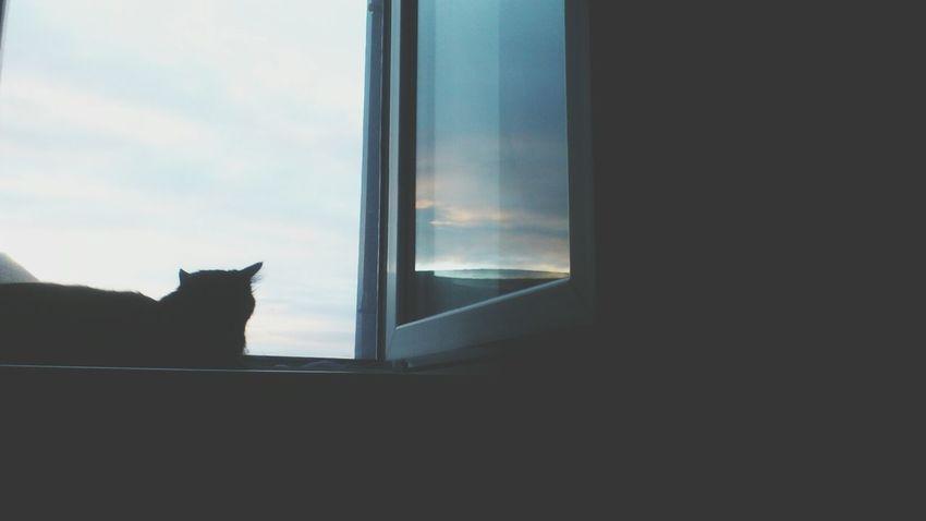 Cat Skyporn Love