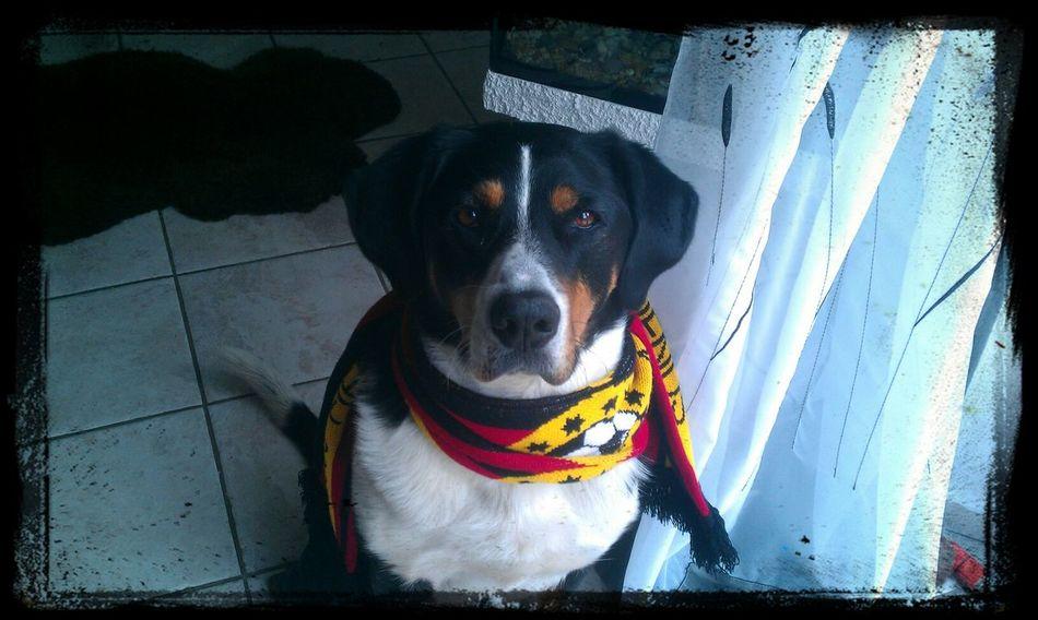 Dog❤ Germany Deutschland Wm2014 Soccer⚽ Fußballfieber Fussball Mein Hund Hund Sweet♡