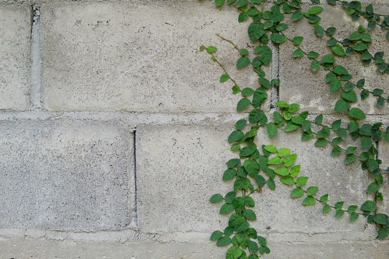 Wall Leaf Wall - Building Feature Plant Part Green Color Plant Built Structure Architecture Building Exterior Wall Ivy Growth Day No People Nature Textured  Creeper Plant Full Frame Backgrounds Concrete Outdoors