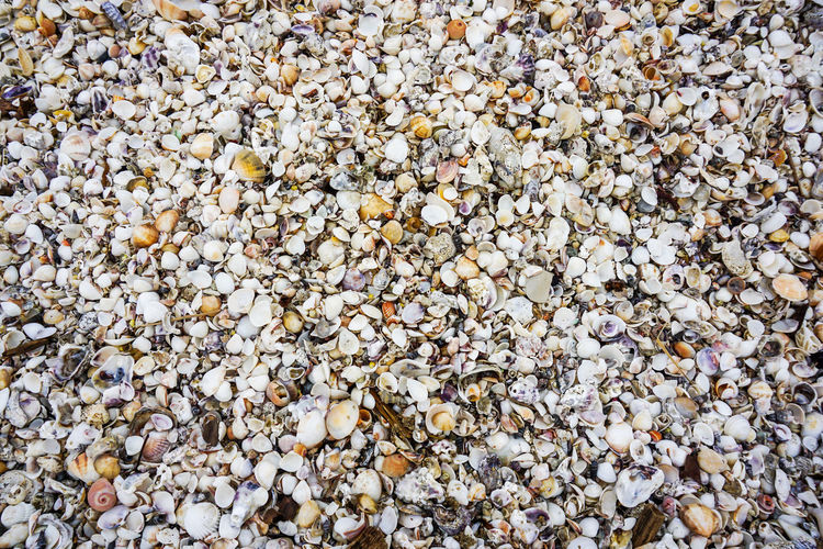 shells background Backgrounds Full Frame Beach Close-up Large Group Of Objects Outdoors Pebble Beach Beauty In Nature Nature Day Pebble Abundance No People
