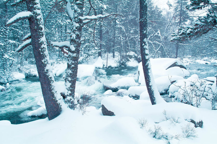 Glacial Atmosphere Snow Snowy Forest River Cold Winter ❄⛄ Cold Temperature France