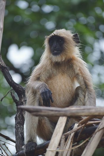 Low angle view of langur sitting on wood