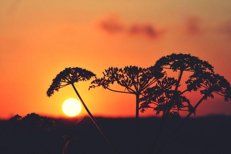 Parasol EyeEm Around The World EyeEm Best Shots Eye4photography  EyeEm Best Shots - Sunsets + Sunrise