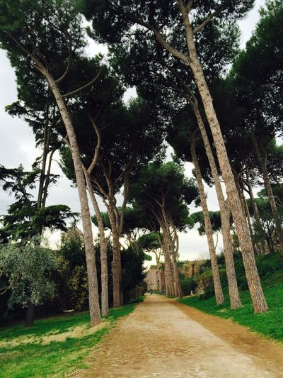How many times has this path been walked back and forth over the past 2000y? Palatine hill. Getting Inspired Discovering Great Works Historical Sights Nature EyeEm Nature Lover Roma Check This Out Hello World Discover Your City Trees