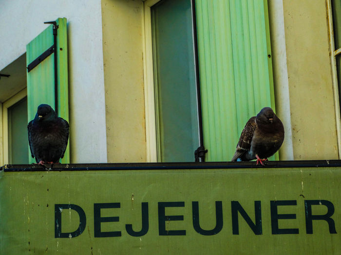 Pigeons Montmartre Animals In The Wild Animal Themes Animal Bird Vertebrate Text Animal Wildlife Perching Group Of Animals Day No People Outdoors Architecture Pigeon Built Structure Déjeuner Hungry Something To Eat