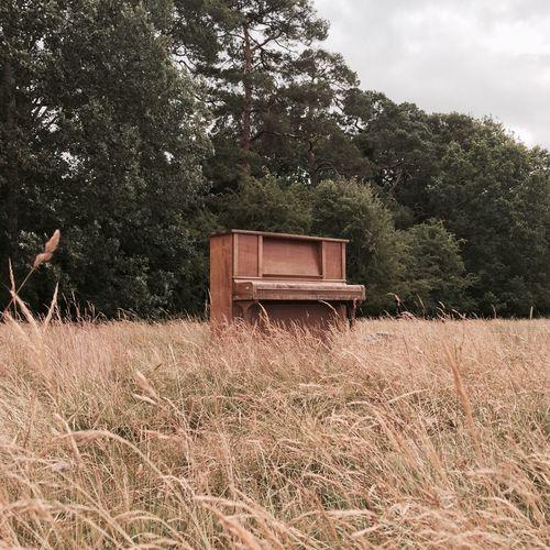 Piano Field