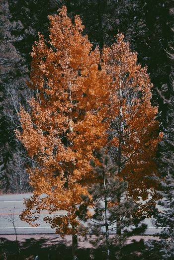 Fall in Colorado 2014 Autumn Fall Colors Colorado Trees EyeEm Nature Lover
