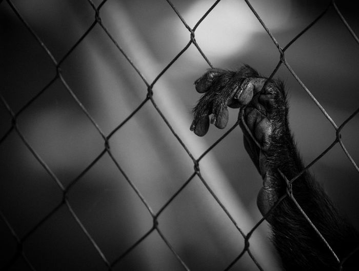 Animal Themes Bird Cage Captivity Chainlink Fence Close-up Day Mammal No People One Animal Outdoors Trapped Zoo