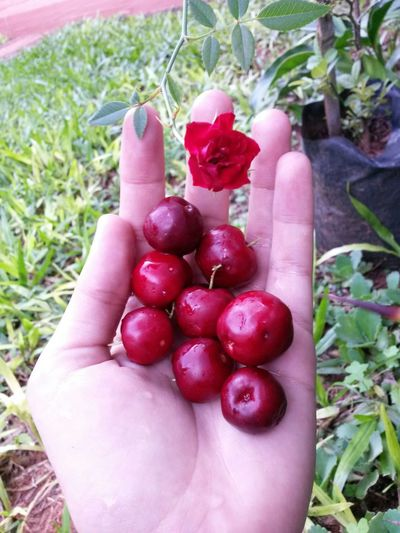 Fruits ♡ Check This Out Enjoying Life ♡♡♡♡ Nature_collection Flowerporn Cherryred Love ♥
