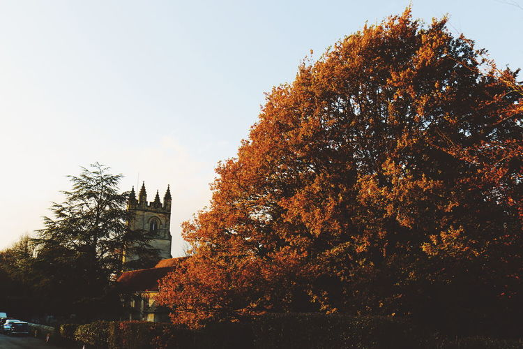 Chiddingstone Tree Outdoors Sunset Day Sky Autumn No People Low Angle View Nature Architecture