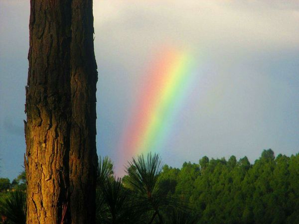 brOWn n bLaCK Twins Colors Of Sky Forest Rainbow🌈
