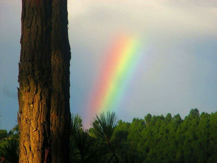 brOWn n bLaCK Twins Colors Of Sky Forest Rainbow🌈 Capture Tomorrow