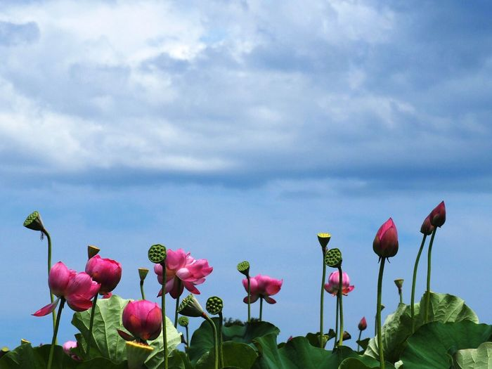 Clouds And Sky Color_boom Flower Collection EyeEm Flower EyeEm Nature Lover
