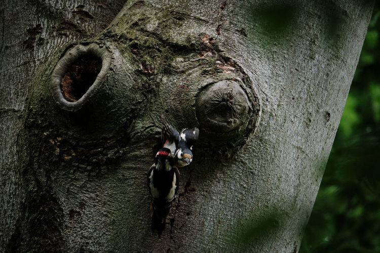 Close-up of insect on tree trunk