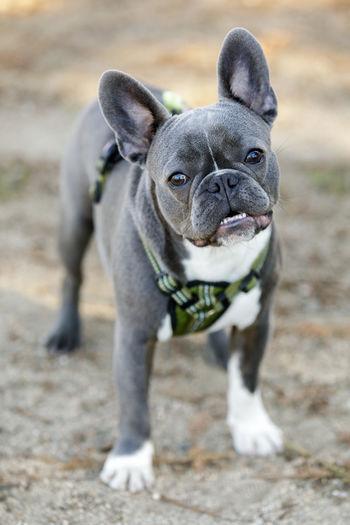 Portrait of dog at park