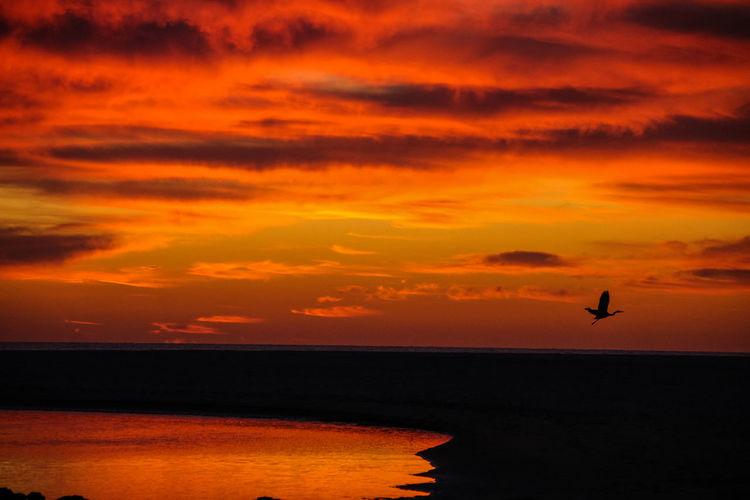 Silhouette bird flying over sea against sky at dusk