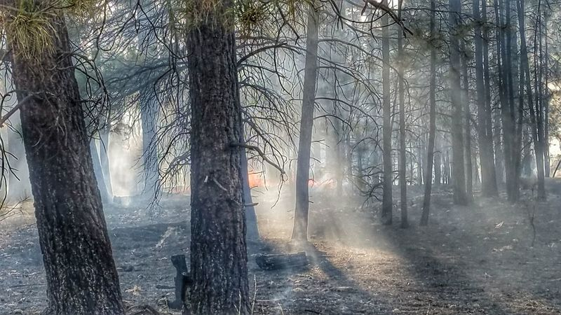 Mongollon Rim Forest Tree No People Nature Outdoors Landscape Prescribed Burn Apache Sitegreaves National Forest Usforestservice The Great Outdoors - 2017 EyeEm Awards