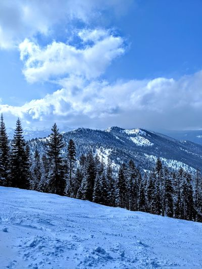 Northstar Tree Snow Mountain Cold Temperature Winter Blue Forest Pine Tree Pinaceae Polar Climate Spruce Tree Snowboarding Ski Holiday Powder Snow Ski Resort