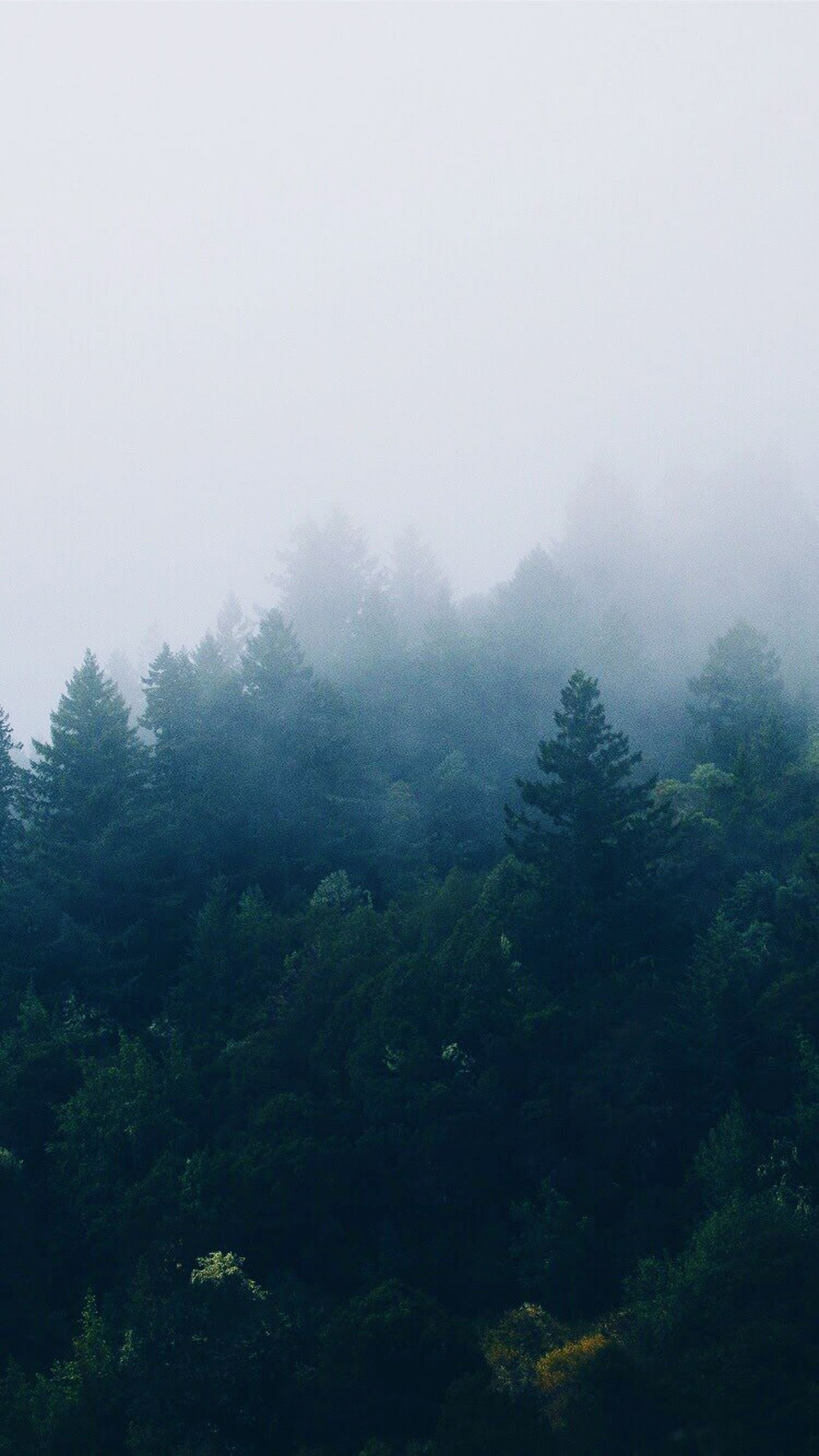 tree, nature, beauty in nature, sky, no people, growth, forest, outdoors, day, lush - description