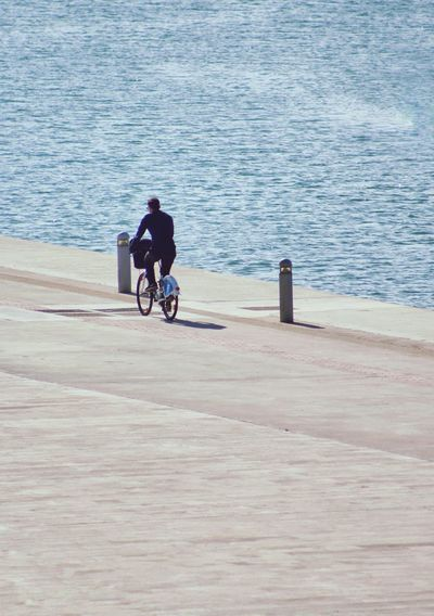 Rear view of man riding bicycle by sea