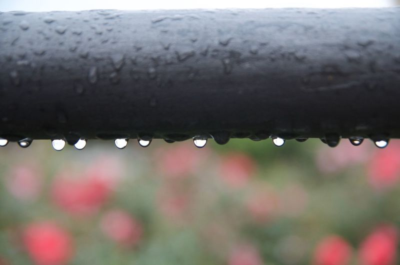 Close-up of waterdrops on water drops