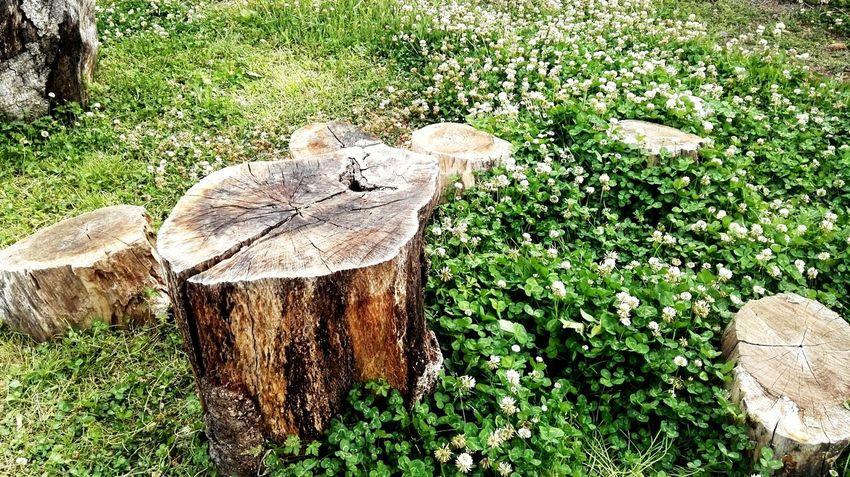树桩 Tree Field Grass Green Color