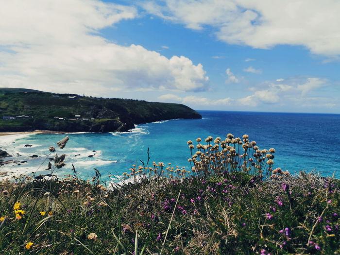 St Agnes, Trevaunance Cove Flower Water Sea Beach Flower Head Multi Colored Blue Beauty Mountain Sky Coastal Feature Wildflower Coast Cliff Seascape Coastline