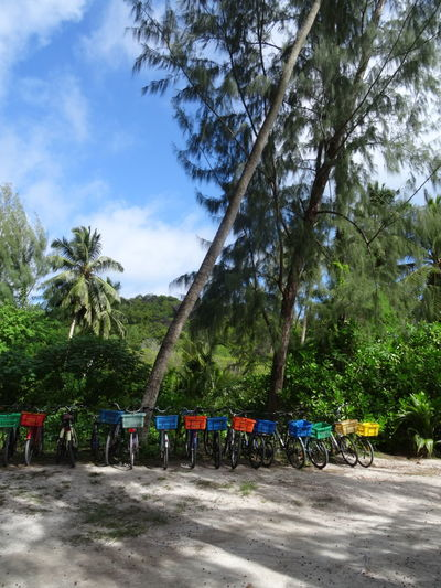Outdoors Seychelles Seychelles Islands Adventure Tourism Travel Destinations Tranquility Tropical Climate Vacations Transportation Bycicle Ladigueisland Ladigue