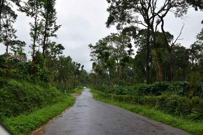 Beauty In Nature Country Road Diminishing Perspective Empty Road Green Color Growth Long Nature No People Outdoors Plant Road Scenics Sky The Way Forward Tree Treelined Unedited Unedited Photo Unedited The Purist Vanishing Point
