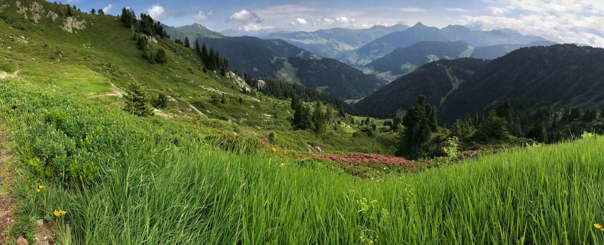 Grass Mountain View Nature Panorama Tranquility Alps French Alps Landscape Meadow Mountain Mountain Range Scenics Tranquil Scene