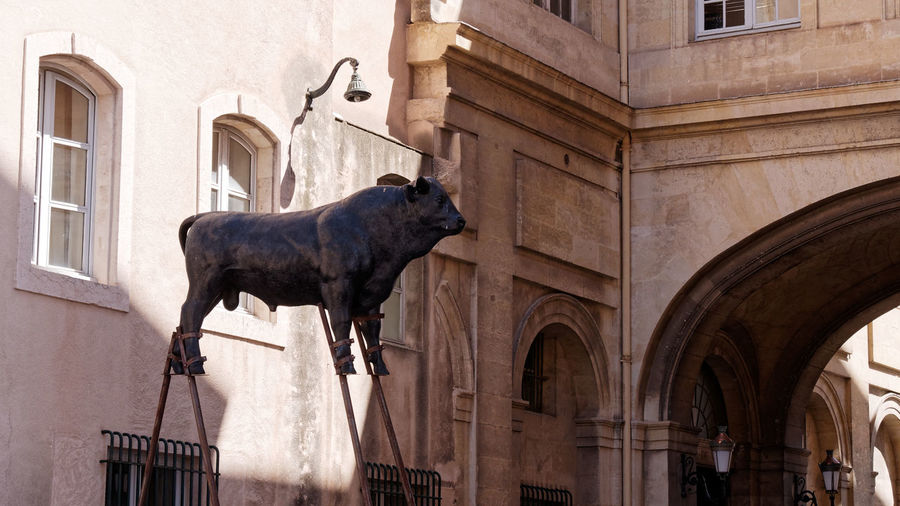 Cow Animal Animal Representation Statue Statues And Monuments Statue In The City Sculpture Sculpture In The City Arch Architecture Architecture_collection Art Façade Facade Building Window Stilt Built Structure Building Exterior Mammal Animal Themes One Animal Building Day Representation No People City Cityscape Marseille