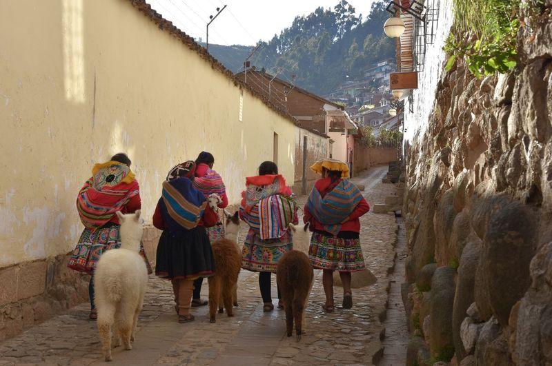 Alpaca Andes