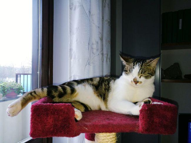 Cloe Goduria EyeEm Selects Domestic Cat Pets Indoors  Window Domestic Animals One Animal Animal Themes Feline Relaxation