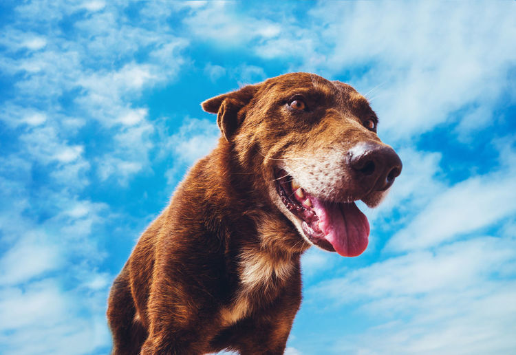 Low angle view of dog sticking out tongue against sky