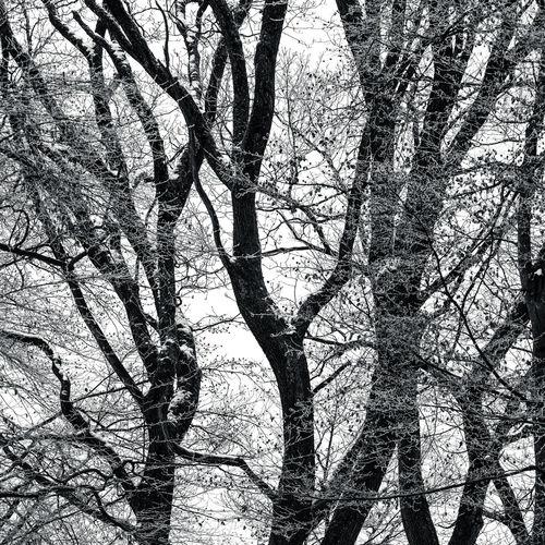Abstrajt
