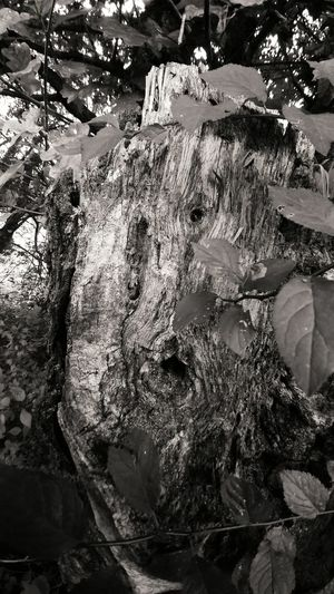 Facetree Face Tree Lgg5photography Lg G5 Smartphone Photography Smartphonephotography LG  Black&white Black And White No People Beauty In Nature Close-up Nature Tree Trunk Tree Monochrome Photography